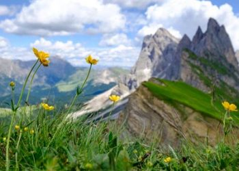 Groednertal A Burst Of Summer Wild Flowers Colors And Mountain Landscapes Seceda Val Gardena Dolomites Italy T20 OzKL0G 400x